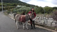 Alo and donkeys