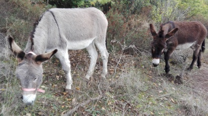 winter donkeys